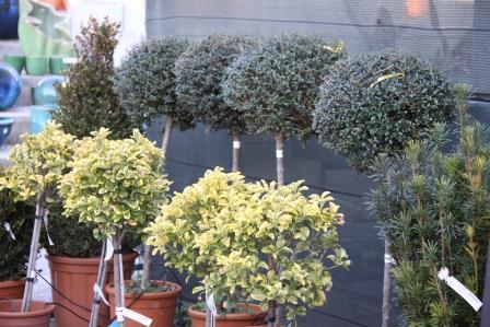 Um jardim para cuidar o encanto da topi ria nos jardins for Arbustos para exterior