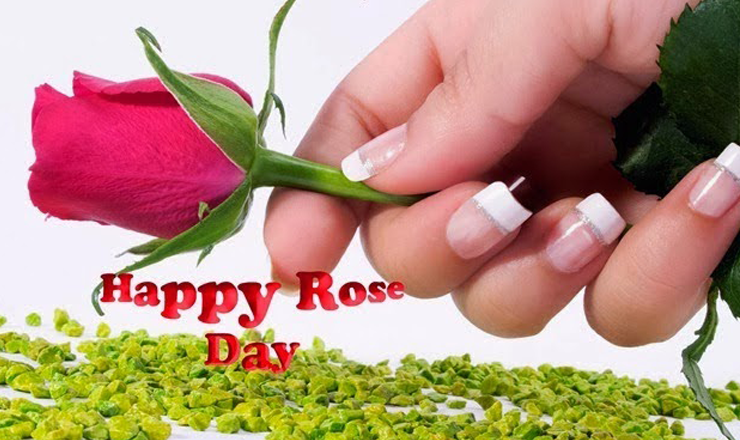 Happy Rose Day image Download in HD - Free Download HD All ...