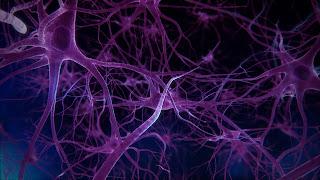 Immune Gene Prevents Parkinson's And Dementia
