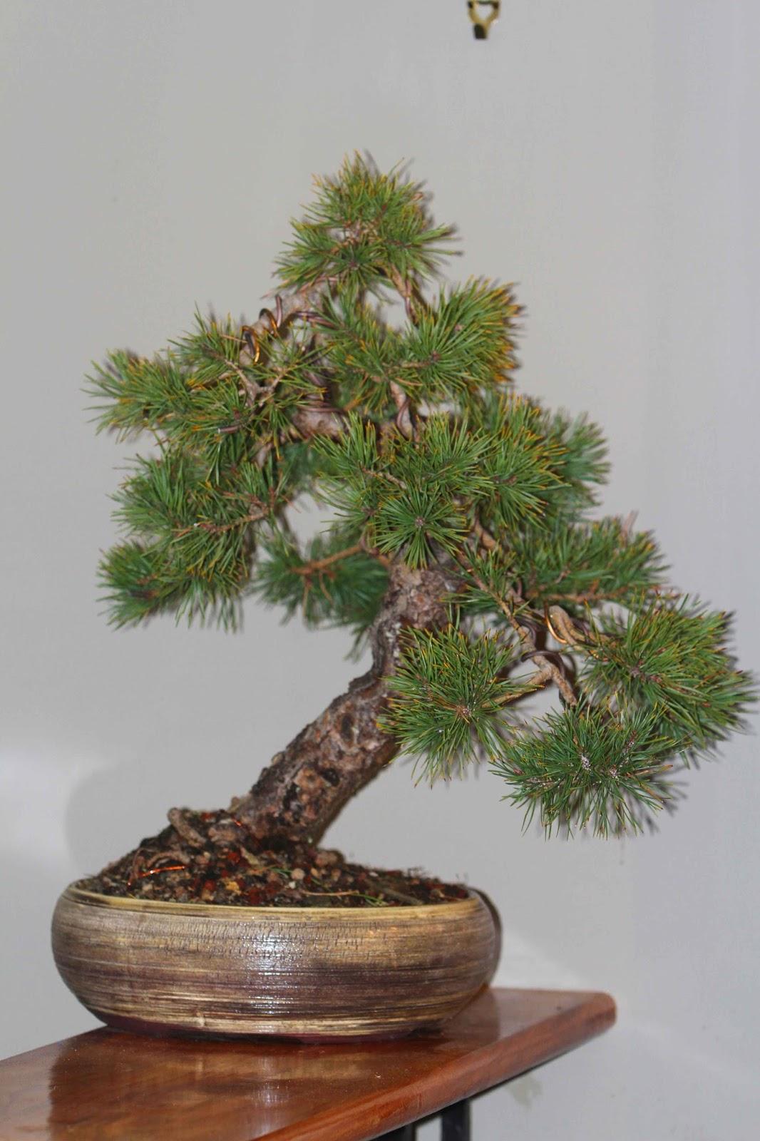 fionnas bonsai pots kiwi made in new zealand the