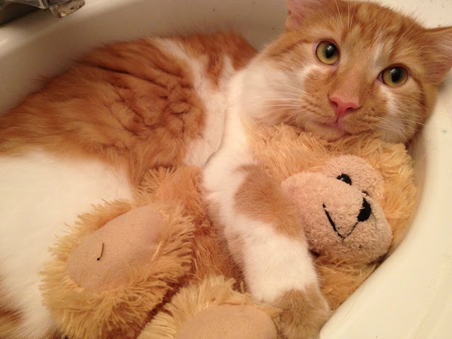 funny cats pictures, cat in sink hugs his toy