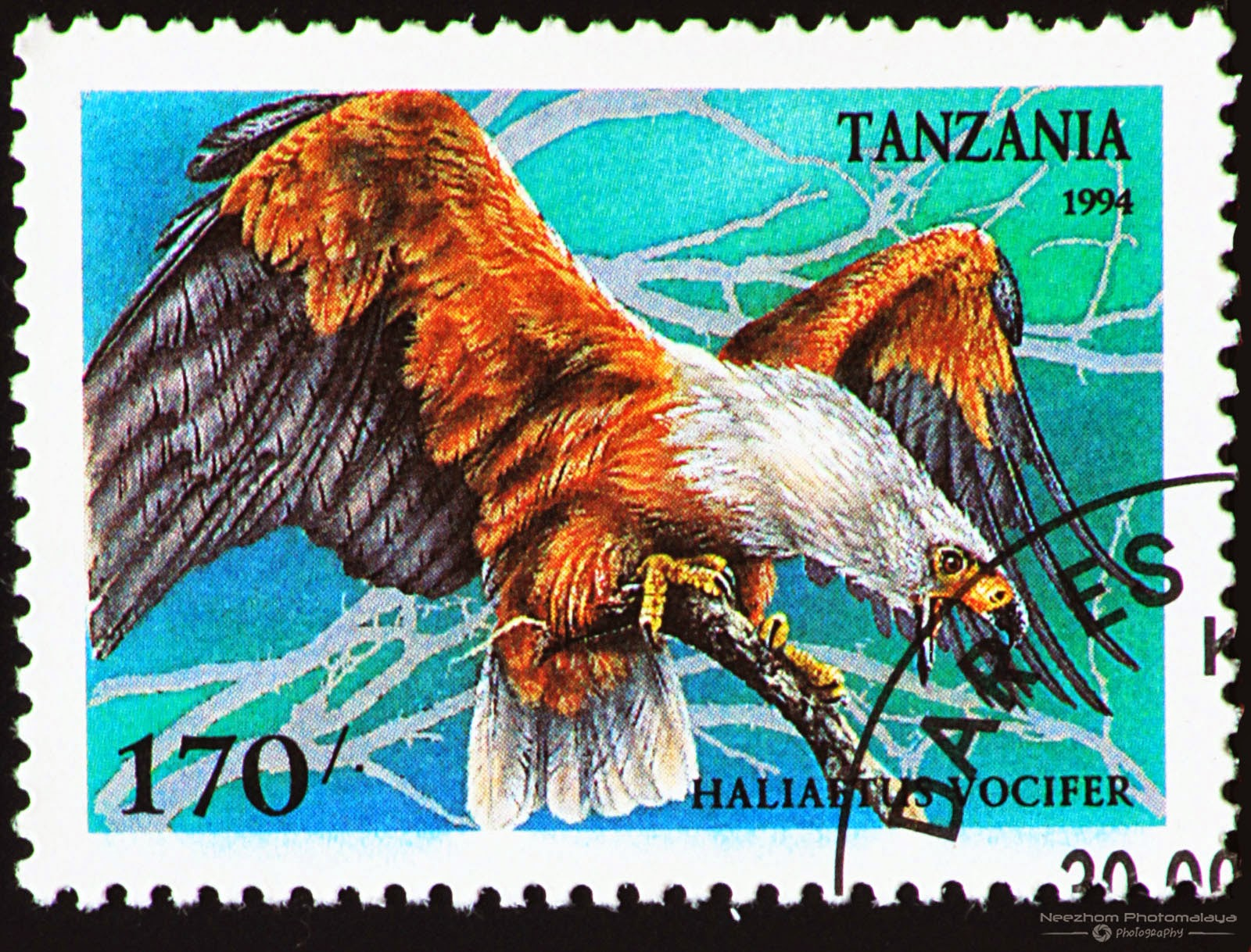 Tanzania 1994 Birds of Prey stamp - African Fish Eagle (Haliaetus vocifer) 170 s