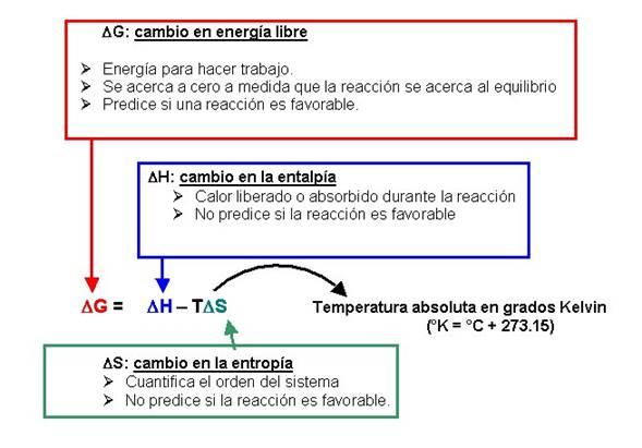 Rodrigo Huerta Alcala: INTRODUCCIÓN A LA BIOENERGETICA