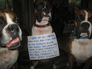 Dog Shaming. Check it out. And yes, of course I had to pick a sample that .