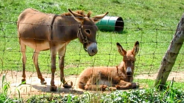 Mother Donkey and child or foal