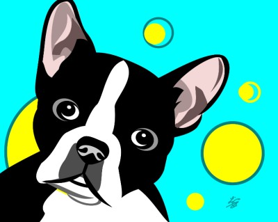 cute Boston Terrier pictures