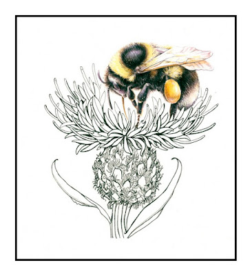Art, Bumblebee, knapweed, Shevaun Doherty