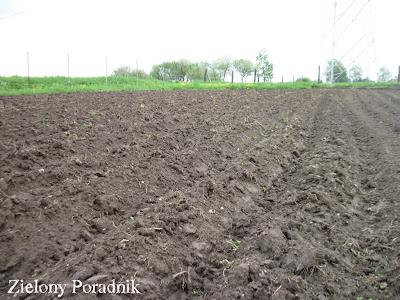 plantacja lawendy