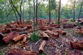 learning gateway cause and effect essay deforestation it is important to have trees planted on land because the roots of the trees anchor the soil down this helps prevent soil erosion especially on rainy days