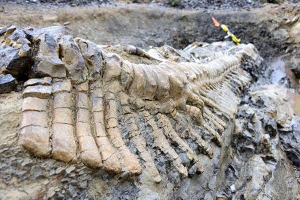 Ekor Dinosaurus Sepanjang Lima Meter Ditemukan di Meksiko
