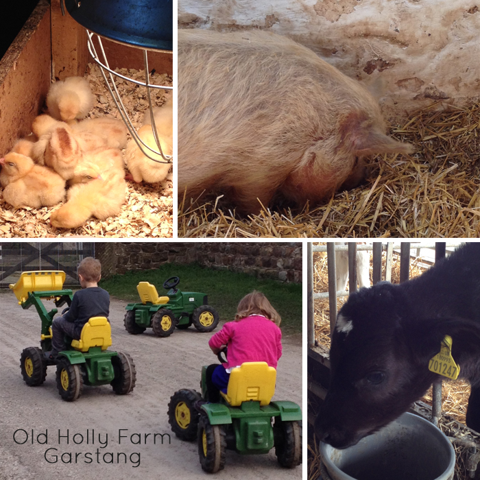Old Holly Farm Garstang - great place to visit with kids #Garstang #farm #kids