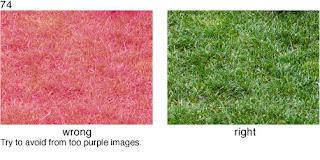 Совет 74. Цвет предметов на фотографии должен быть естественным, без искажений