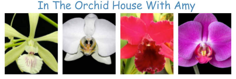 In The Orchid House With Amy