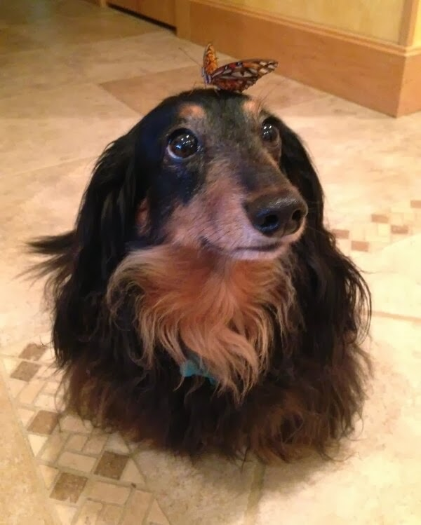 Cute dogs - part 11 (50 pics), cute dog with a butterfly on his head