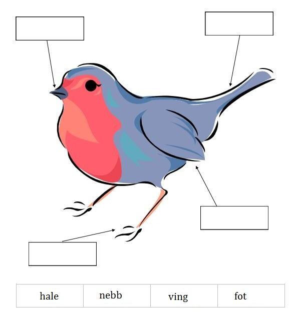 adapted from Homeschool Creations printable bird pack (kindergarten)