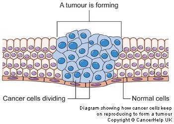 recent development in cancer chemotherapy pdf