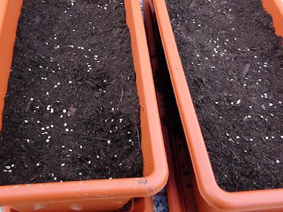 Semilleros en cama fr a - Tierra para semilleros ...