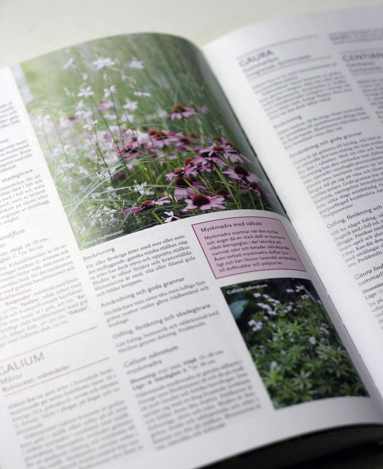 Öarnas trädgårdsplanering: månadens boktips: perenner