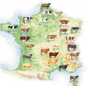 Carte des races bovines françaises