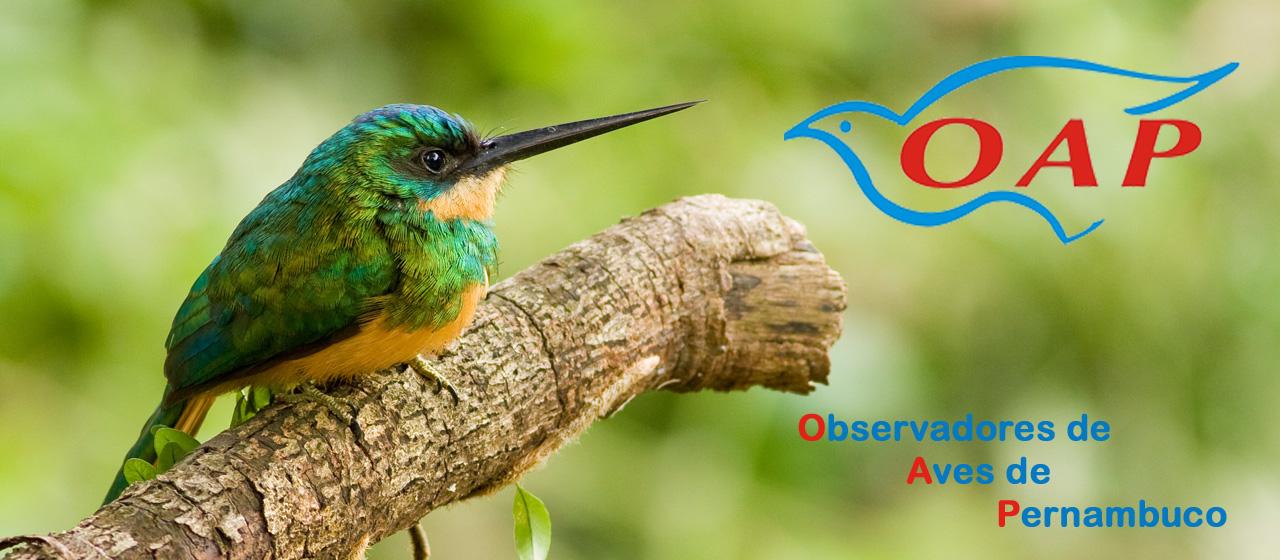 Observadores de Aves de Pernambuco