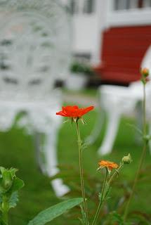 Öppna portar i Kristinestad - blomma