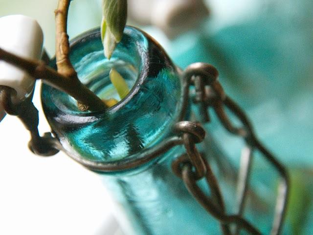 Häggmispel i flaska foto: Anette Brunsell för blogg Rost och Rädisor