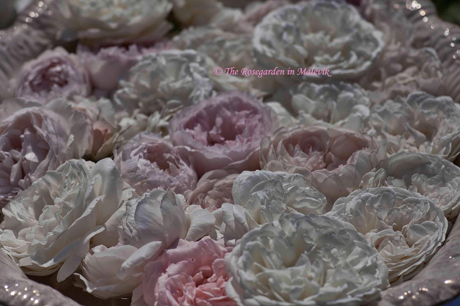 Rose garden malevik: juli 2014