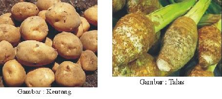 1 - Jenis Jenis Umbi Umbian