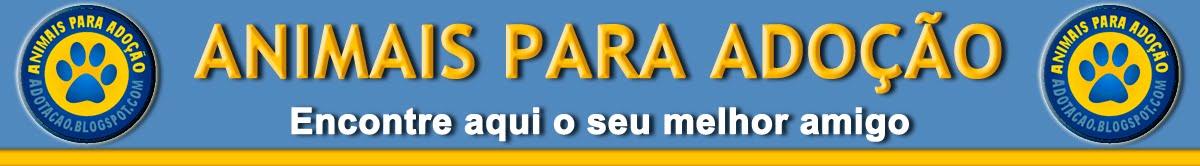 Animais para Adoção - SP