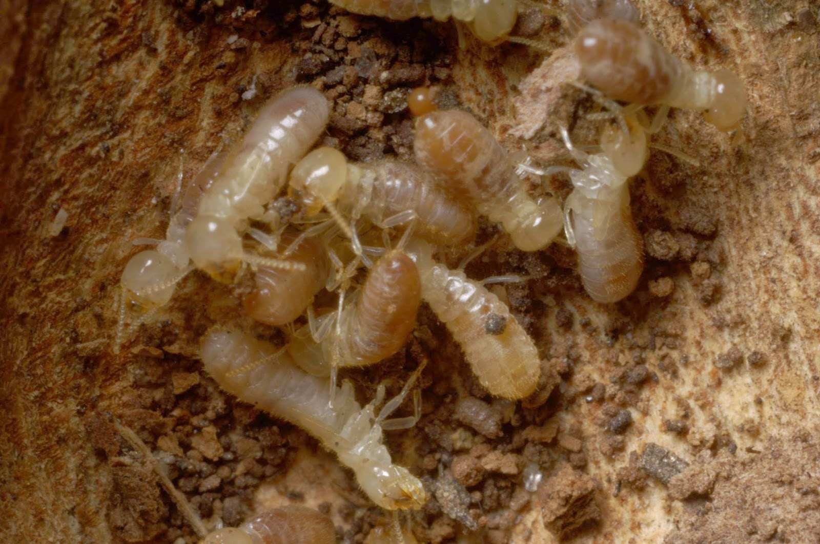 how to take care of termites