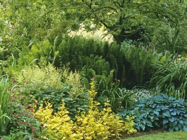 jardim flores e plantas:Flores e Jardins, plantas, jardinagem e paisagismo: projeto do jardim