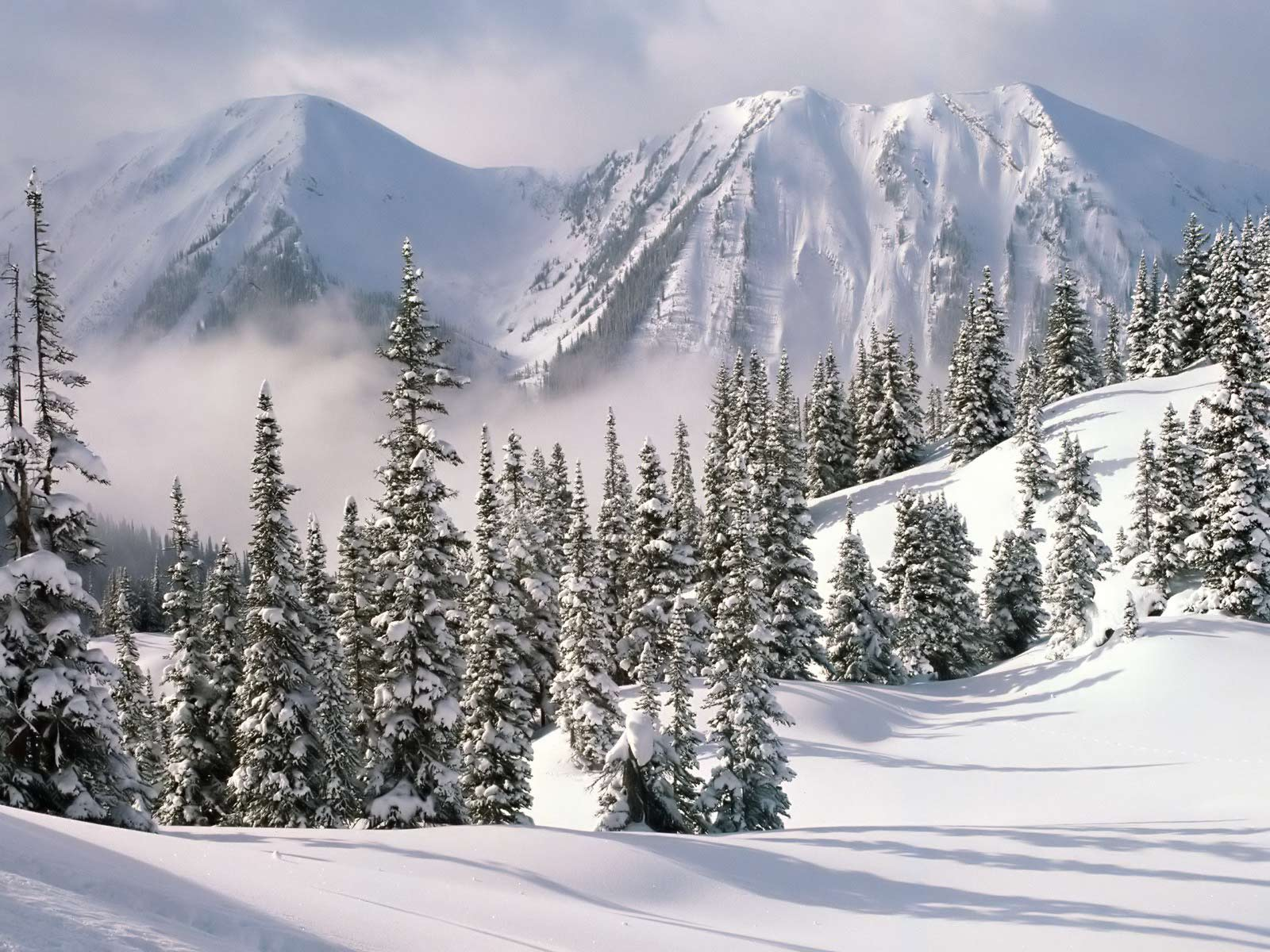 winter wallpaper with a - photo #14