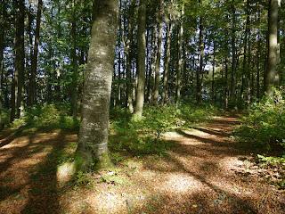 Bild 4: Gelände der ehemaligen Karlsburg auf dem Karlsberg