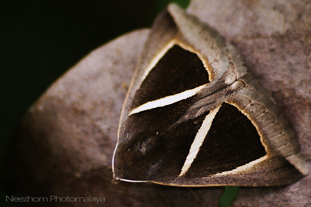 Moth wings patterns