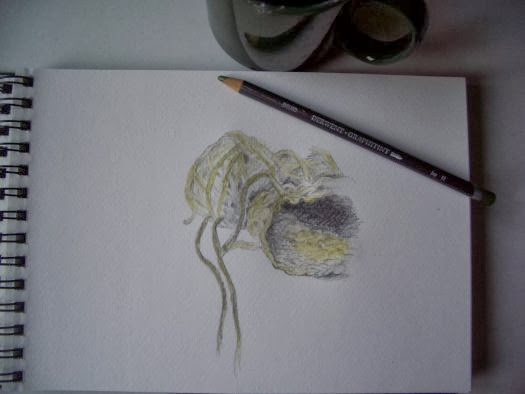 David Moss Drawing Daily Drawings   Wool