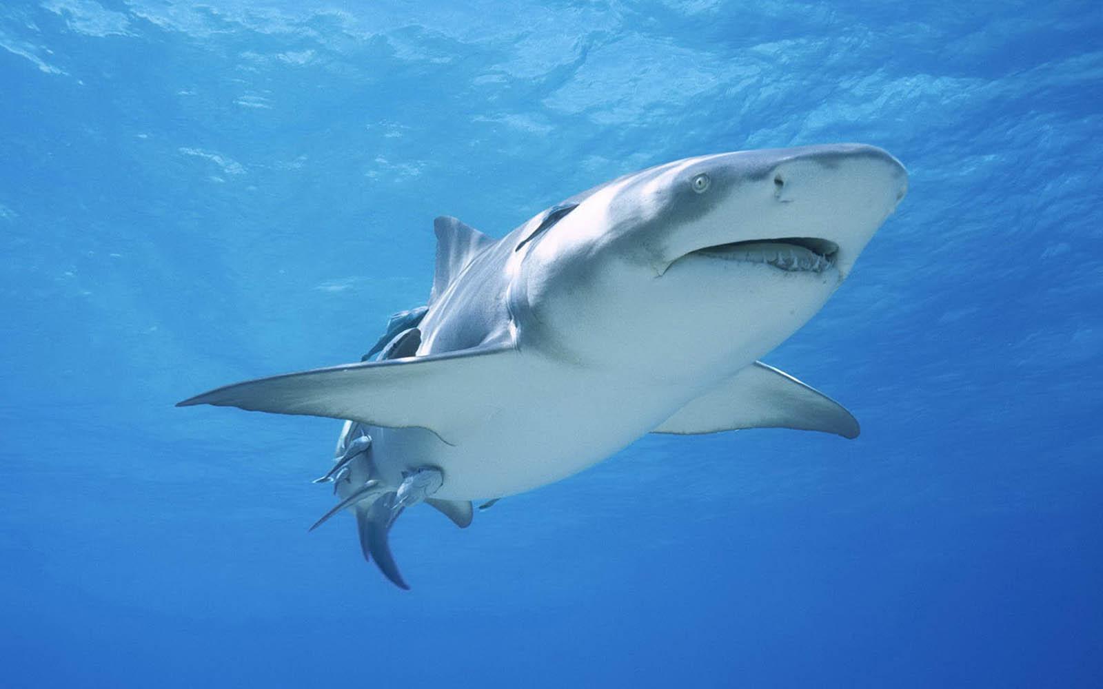 2560x1600 ocean sharks - photo #40