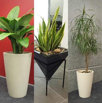 Http Indoorhouseplants Blogspot Com 2011 02 Indoor Plants Cut Formaldehyde Html