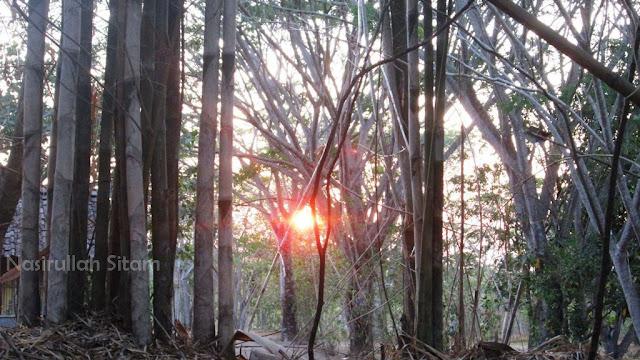 Sinar mentari menyeruak di antara celah pepohonan