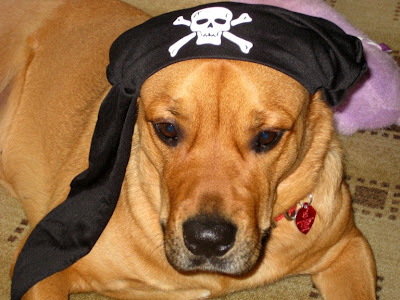 pirate dog costume - turtlesandtails.blogspot.com
