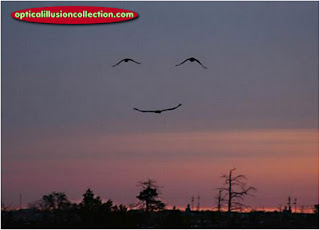 smiley nature optical illusion