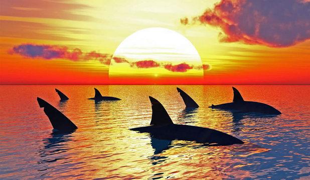 Mărturii de sub asaltul rechinilor