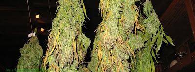 Couverture pour facebook cannabis