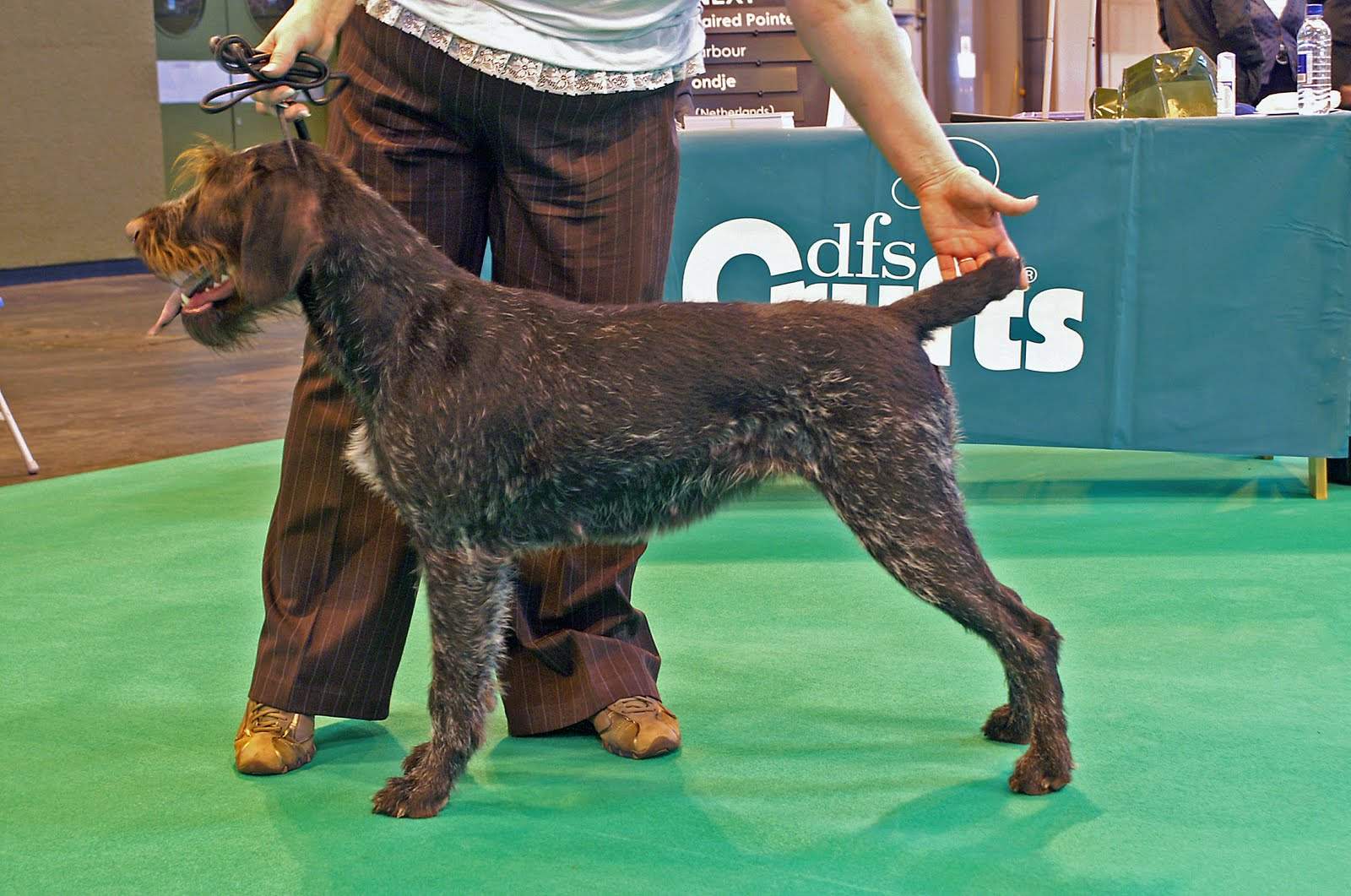 Klancraig Chat: DFS Crufts 2011 - German Wirehaired Pointers