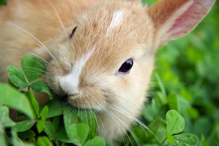 Il Coniglio Non Mangia Carote