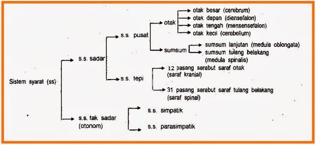 skema sistem saraf
