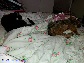 Mr Bumpy and Mr Woof asleep on Mum's bed.