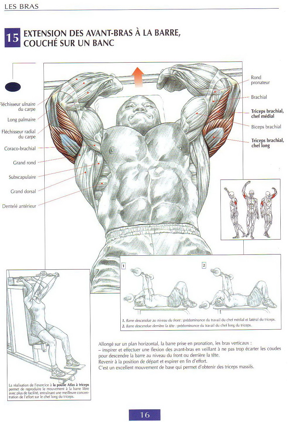Triceps exercices guide de musculation for Guide musculation
