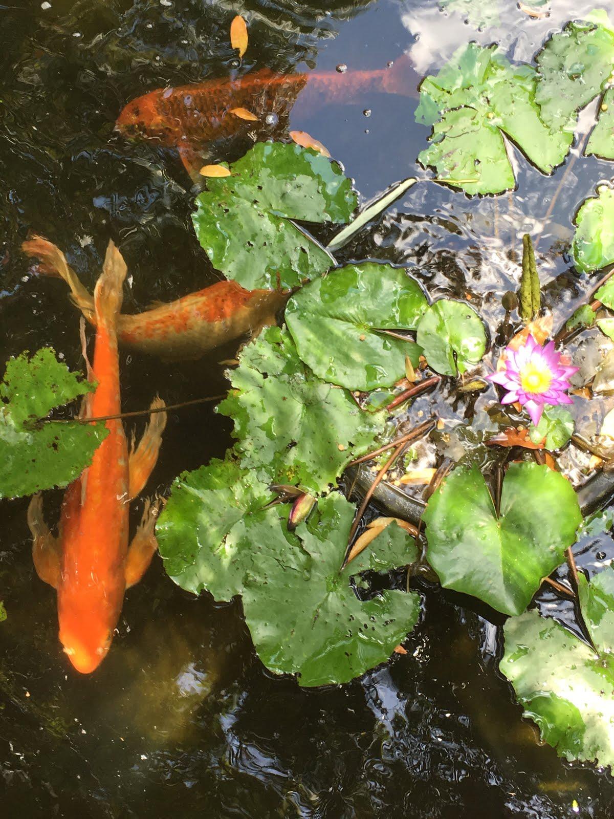 Swim in Peace
