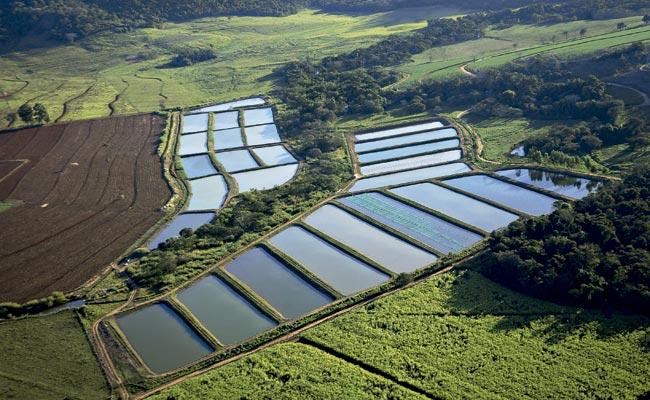 Tipos de constru o de viveiros para piscicultura e suas for Elaboracion de estanques para piscicultura