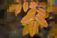 Picnik photo with pixelate effect